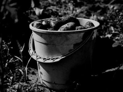 Картофель на Марсе. Фотограф: Екатерина Пастухова