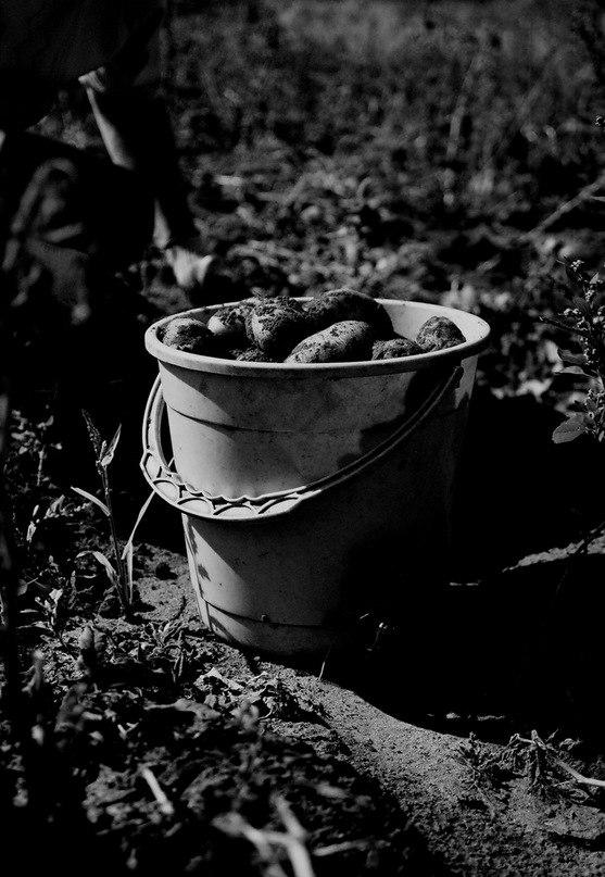 NASA готово выращивать картофель на Марсе
