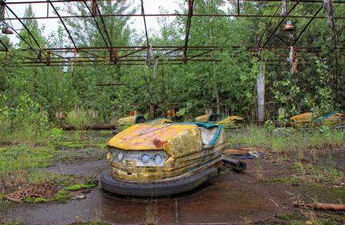 Есть ли дикая жизнь в Чернобыле?