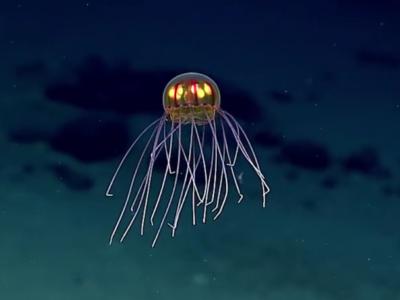 Инопланетная медуза