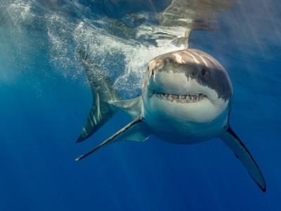 Акулы индивидуальны