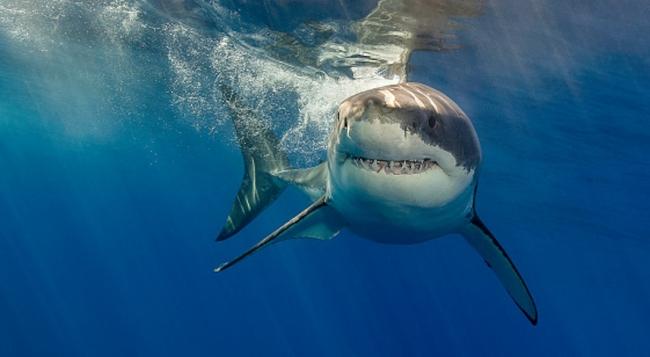 Акулы индивидуальны как люди
