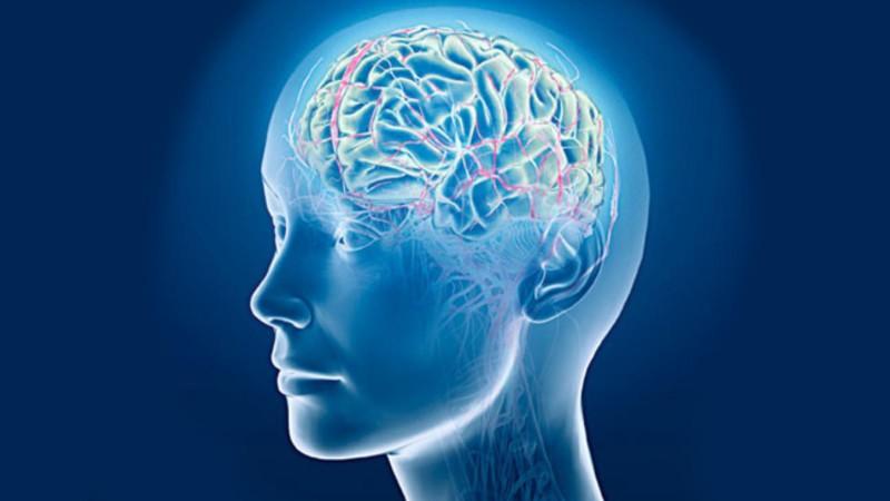 Головной мозг больше у добрых людей