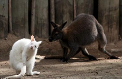 Буэнос-Айрес закрывает старейший зоопарк