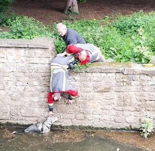 Спасение собаки Принца из воды