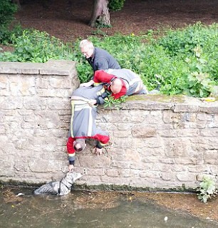 Пожарные спасли Принца из воды