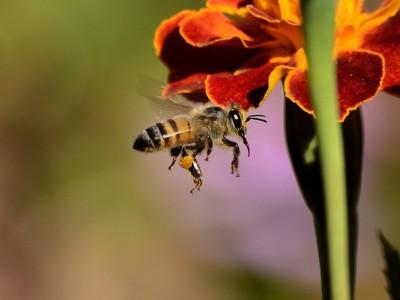 Секрет пчел раскрыт