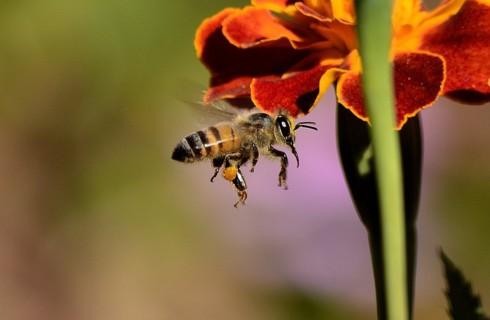 Раскрыт еще один секрет пчел