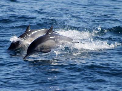 Убежище для дельфинов
