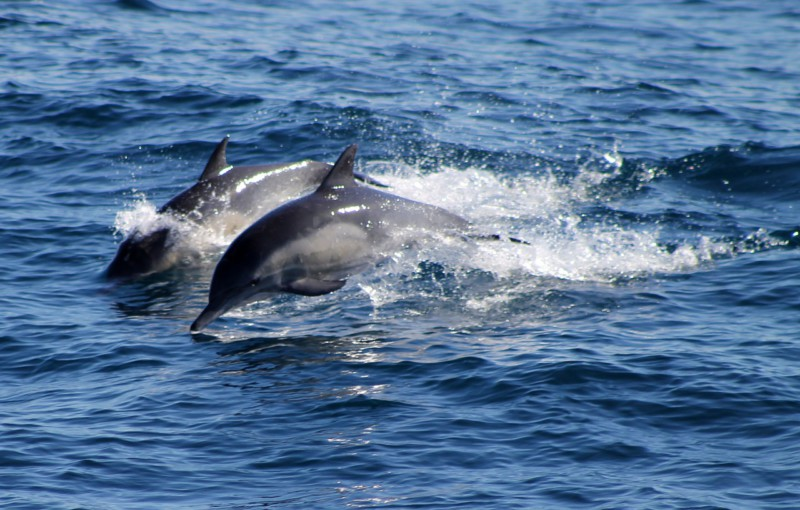Убежище для дельфинов откроется в Балтиморе