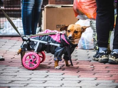 Помощь животным. Собака из приюта «Пес и кот», Череповец