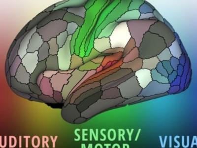 Новую карту мозга еще предстоит узучить