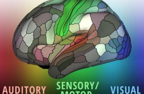 Ученые представили новую карту мозга