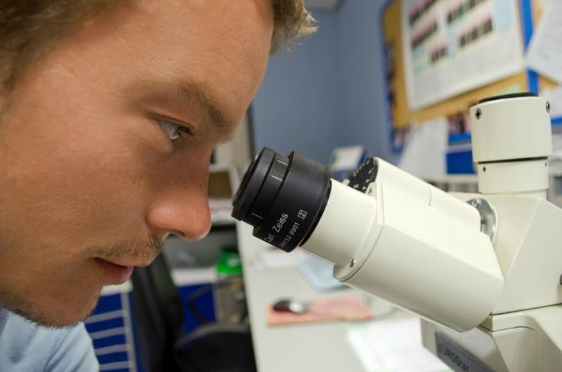 Ученые нашли ключ к воспроизводству костей
