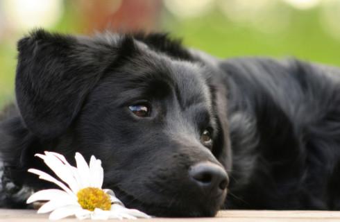 Собаки способны понимать человеческую речь
