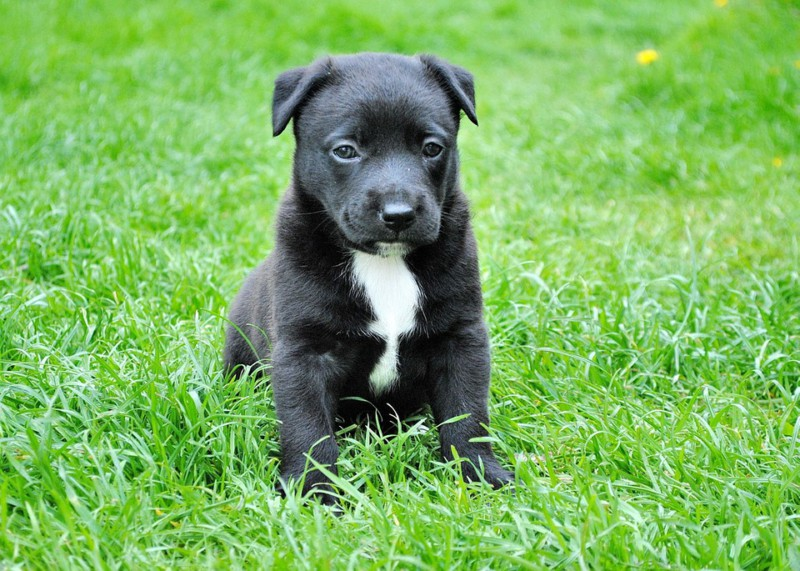 7 способов избавить собаку от стресса