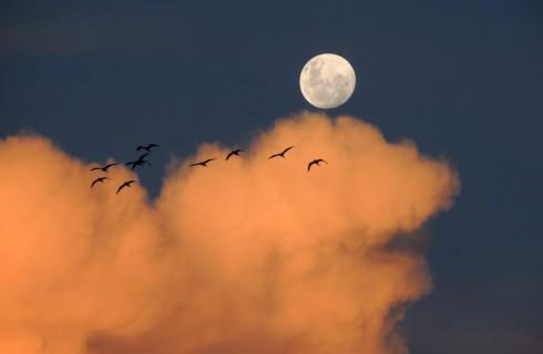 Американцы не забыли о полетах на Луну