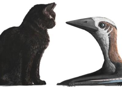 Миниатюрный птерозавр