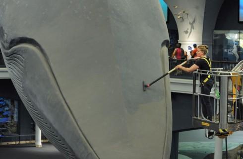 Тысячи людей следили за мытьем кита