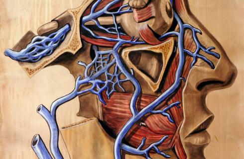 Новейшие биоинженерные сосуды могут расти вместе с организмом