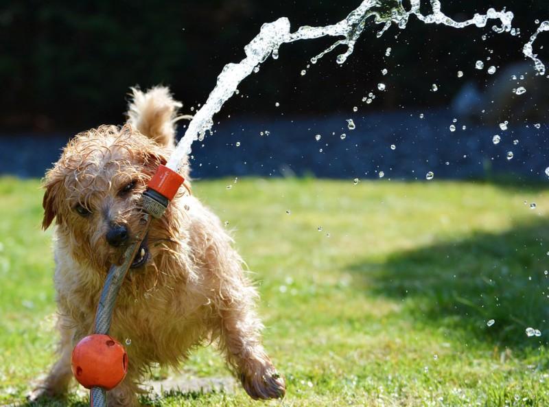 Собаки игнорируют глупые команды