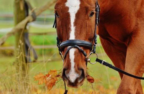 Лошади могут разговаривать символами