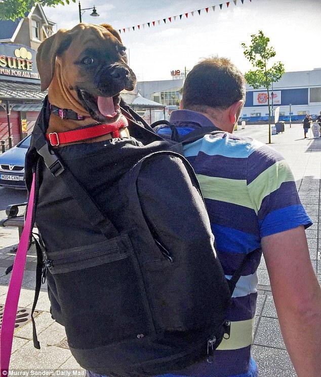 Мир увидел самого счастливого пса