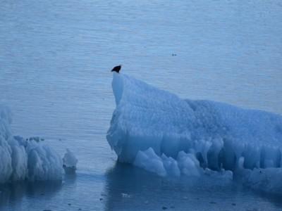 Двигать айсберги для российских ледоколов — не проблема