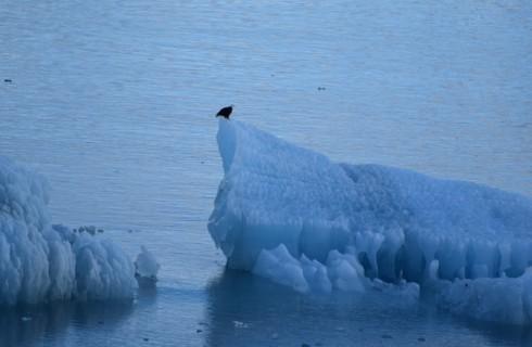 Россияне научились двигать айсберги