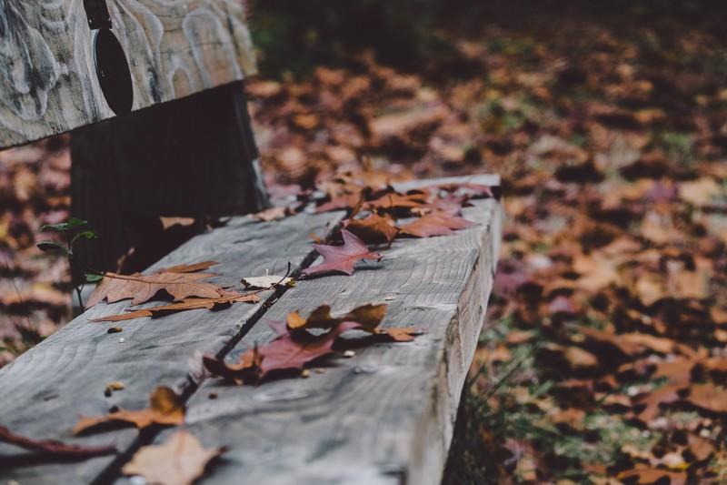 Топ-10 фактов о ноябре