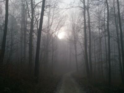 Как ездить в тумане
