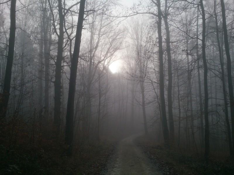 Лучшие советы о том, как ездить в тумане