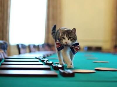 Рейтинг котов: Кот Ларри