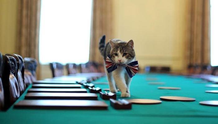 Представляем самых популярных котов года