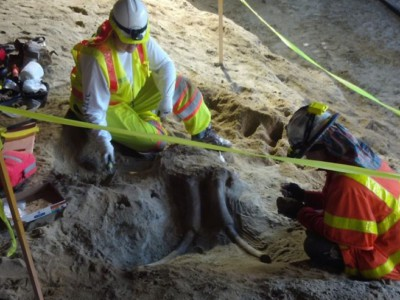 Древние мамонты найдены в США