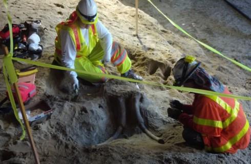 Доисторические животные найдены в Лос-Анджелесе