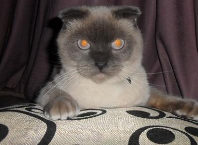 Кот-политик Барсик