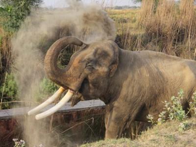 Слон Сурадж