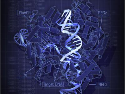 Заблокировать CRISPR/Cas9