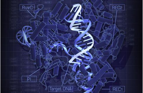 Редактор генов можно аварийно выключить