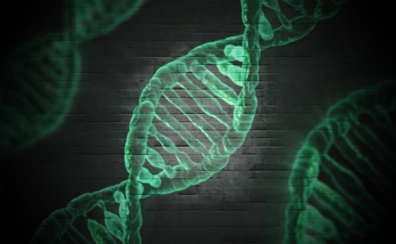 Лидерство передается через гены