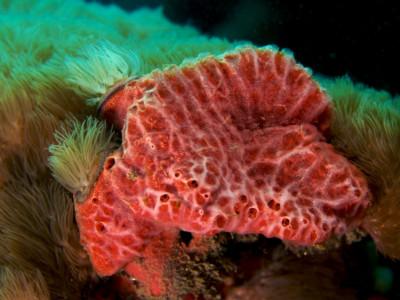 Морские губки
