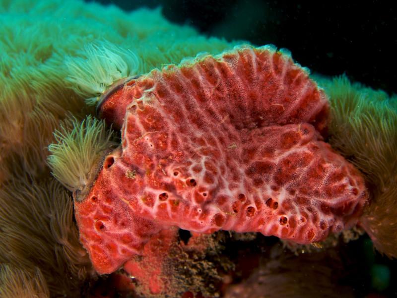 Апокалипсис способны пережить морские животные