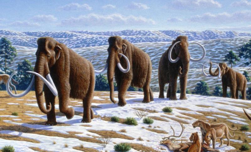 Через два года по Земле снова пойдут мамонты