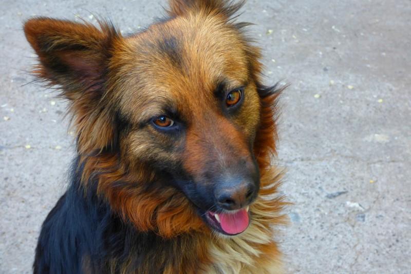 Владельцы собак видят у них человеческие лица