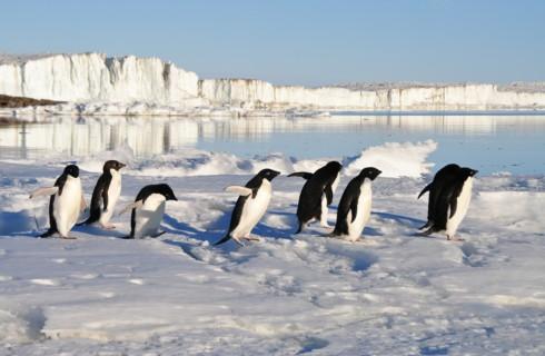 Диета пингвинов больше не секрет
