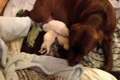 Зеленый пес родился на Земле