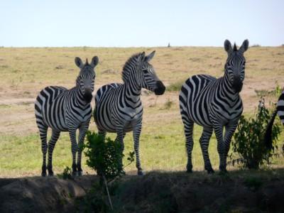 Лучшие места для сафари. Кения