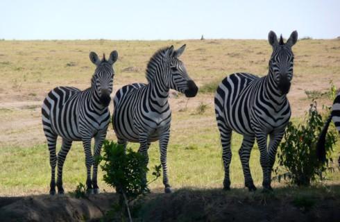 Пять лучших мест для сафари в мире