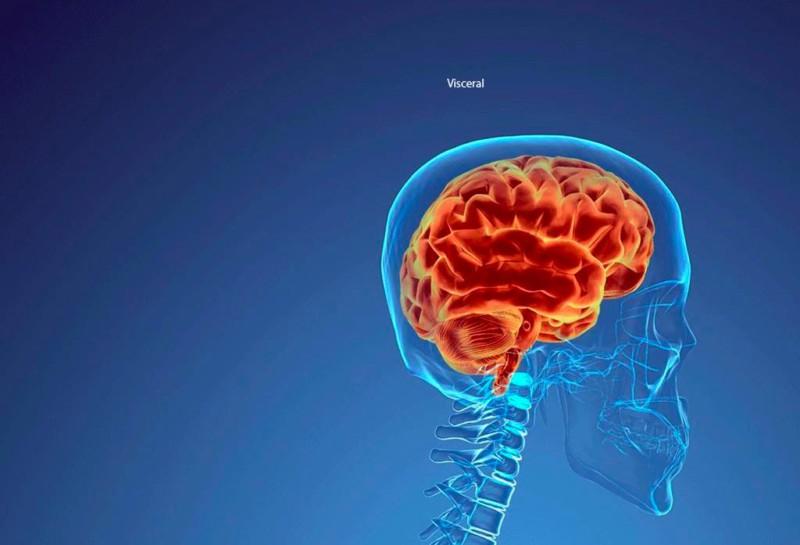 Миллион евро за исследование мозга